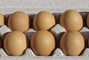 Large-Brown-Eggs-in-Carton.jpg